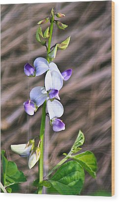 Crucian Wild Orchid Wood Print by David Alexander