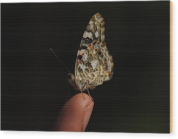 Wood Print featuring the photograph Curious Butterfly by Tam Ryan