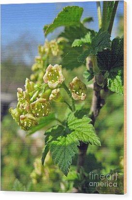 Currant In Bloom Wood Print by Ausra Huntington nee Paulauskaite
