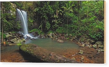 Curtis Falls - Mt Tamborine Wood Print by Mark Lucey