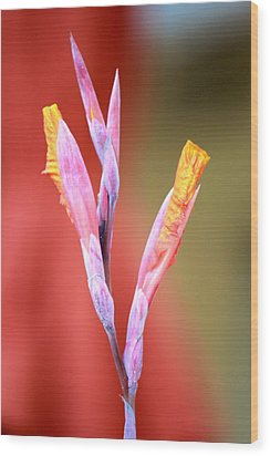 Cusp Of Emergence Wood Print by Leigh Meredith