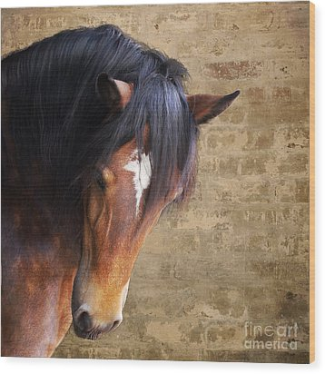 Cute Bay Horse With Long Mane Wood Print by Ethiriel  Photography