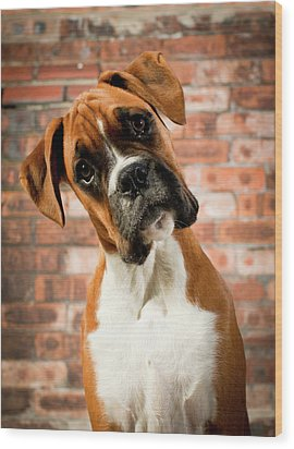 Cute Dog Wood Print by Danny Beattie Photography