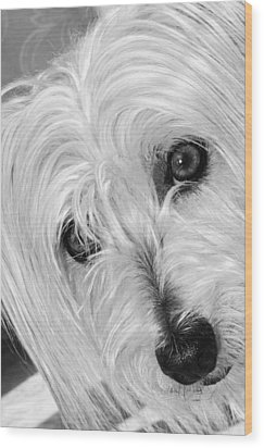 Cute Dog Wood Print by Imagevixen Photography