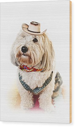 Cute Dog In Halloween Cowboy Costume Wood Print by Elena Elisseeva