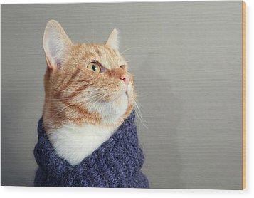 Cute Red Cat With Purple Scarf Wood Print by Paula Daniëlse