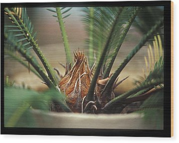 Cycad Wood Print by Miguel Capelo