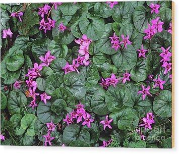 Cyclamen Flowers (cyclamen Coum) Wood Print by Bob Gibbons