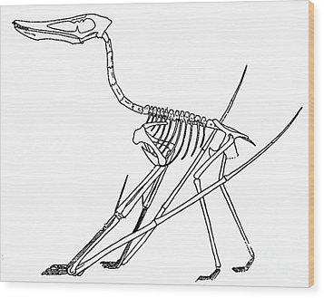 Cycnorhamphus Suevicus Wood Print by Science Source