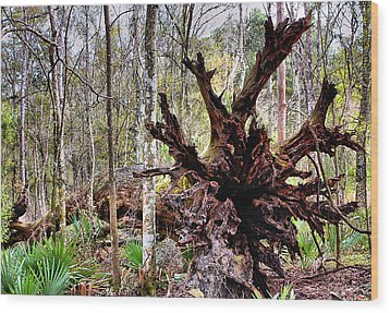Cypress Roots Wood Print by Kristin Elmquist