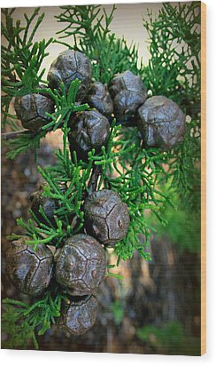 Cypress Seed Pods Wood Print by Cindy Wright