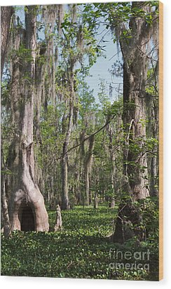 Cypress Trees And Water Hyacinth In Lake Martin Wood Print by Louise Heusinkveld