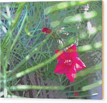 Cypress Vine With Foliage Wood Print by Padre Art