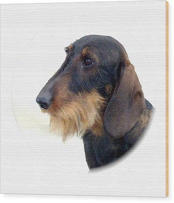 Dachshund 847 Wood Print by Larry Matthews