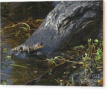 Daddy Alligator And His Baby Wood Print by Sabrina L Ryan