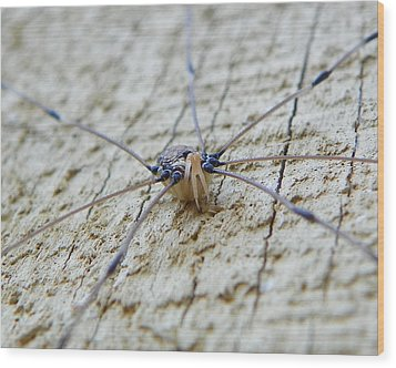 Wood Print featuring the photograph Daddy's Long Legs by Chad and Stacey Hall