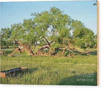 Dad's Tree Wood Print