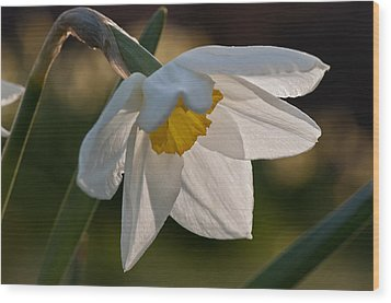 Daffodil Closeup Wood Print by Ron Smith