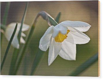 Daffodil Wood Print by Ron Smith