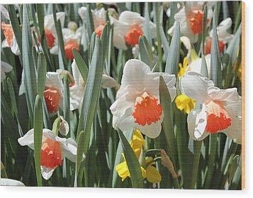 Daffodils Wood Print by Felix Zapata