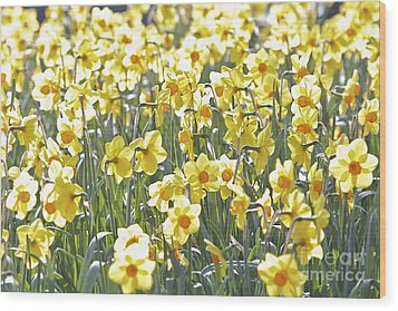 Wood Print featuring the photograph Daffodils  by Gary Bridger