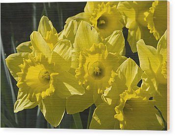 Wood Print featuring the photograph Daffodils by Rob Hemphill