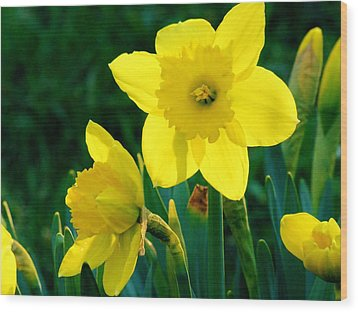 Wood Print featuring the photograph Daffodils by Sherman Perry