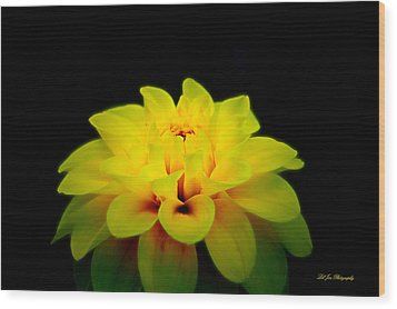 Wood Print featuring the photograph Dahlia Delight by Jeanette C Landstrom