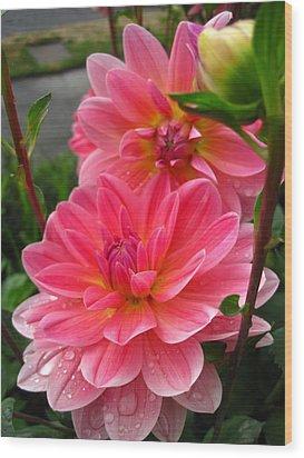 Dahlia Dew Wood Print