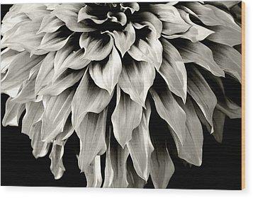 Dahlia Flower  Wood Print by Sumit Mehndiratta