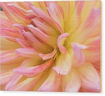 Dahlia Glow Wood Print
