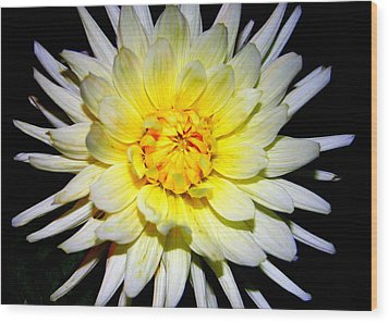 Wood Print featuring the photograph Dahlia In White And Yellow by Laurel Talabere