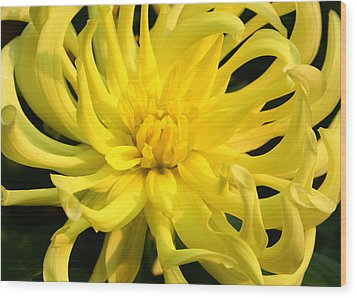 Wood Print featuring the photograph Dahlia In Yellow by Laurel Talabere