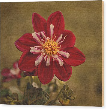 Dahlia Wood Print by Sandy Keeton