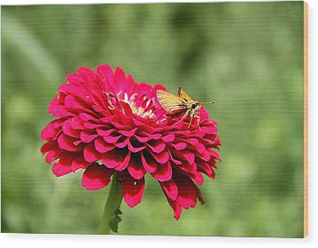 Wood Print featuring the photograph Dahlia's Moth by Elizabeth Winter
