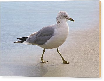 Dainty Sea Gull Wood Print by Paulette Thomas