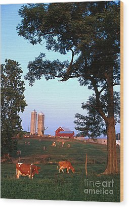Dairy Farm Wood Print by Photo Researchers