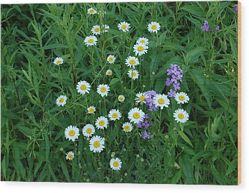 Daisies Wood Print by Aimee L Maher Photography and Art Visit ALMGallerydotcom