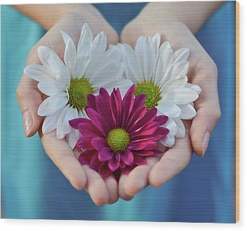 Daisies In Child Hands Wood Print by Natalia Ganelin