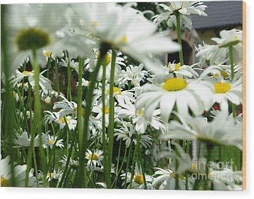 Daisies In My Garden Wood Print by AmaS Art