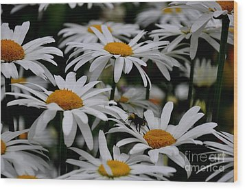Daisies Wood Print by Tanya  Searcy