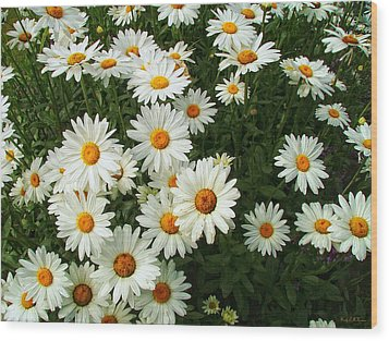 Wood Print featuring the photograph Daisies by Wendy McKennon