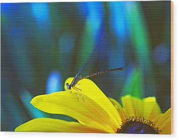Daisy And Dragonfly Wood Print