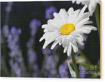 Daisy And Lavender Wood Print by Cindy Singleton
