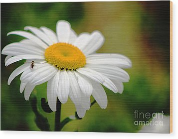 Daisy And The Bee Wood Print