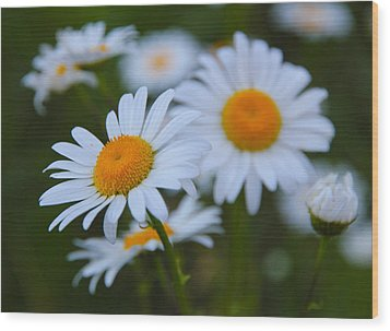 Wood Print featuring the photograph Daisy by Athena Mckinzie