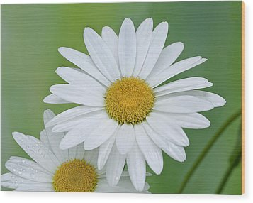 Wood Print featuring the photograph Daisy by Gordon Ripley