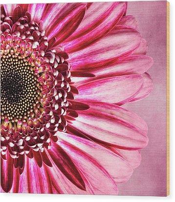 Daisy IIi Wood Print by Tamyra Ayles