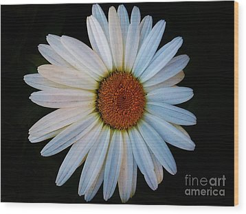 Wood Print featuring the photograph Daisy by Jasna Gopic