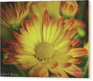 Wood Print featuring the photograph Daisy by John Burns